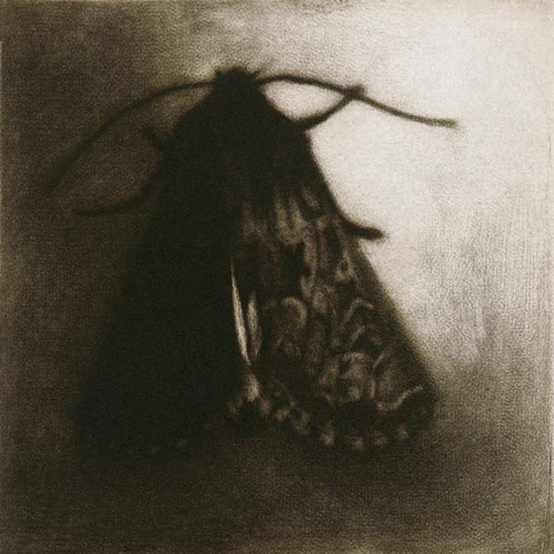 Sarah Gillespie Small Moth (Flounced Rustic), Mezzotint Edition of 30 10 x 10 cm.