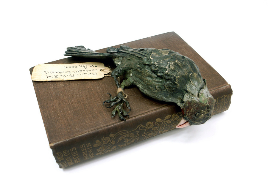 Patrick Haines Darwin's Thistle Bird, Bronze with book ed. of 10