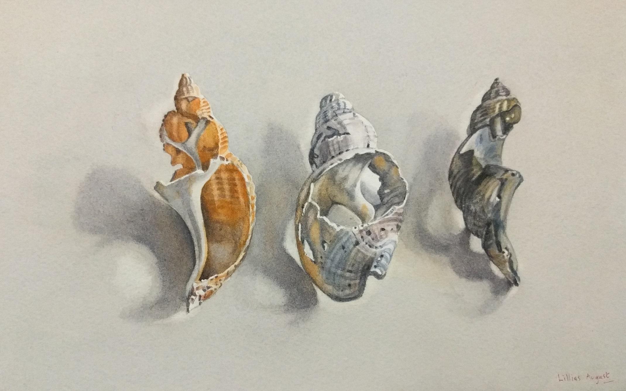 Lillias August Three Broken Shells, Watercolour on paper 23 x 15 cm.
