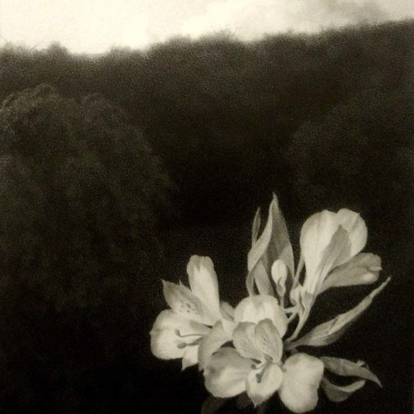 Lewis Chamberlain The White Flower Pencil on paper 20 x 14 cm.