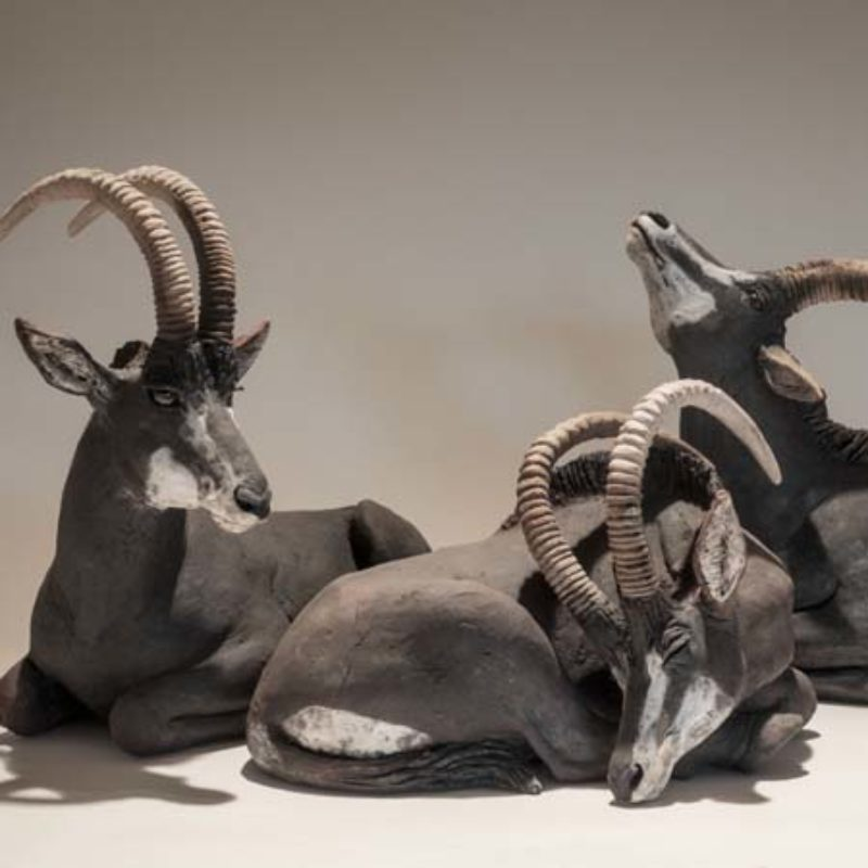 Nick Mackman Sable Antelopes from left #2, #3 and #1, all low-fired ceramic