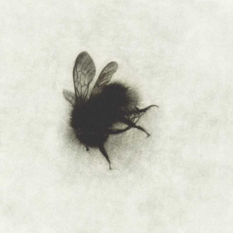 Sarah Gillespie End of the Summer, Mezzotitnt Edition of 40 20 x 20 cm.