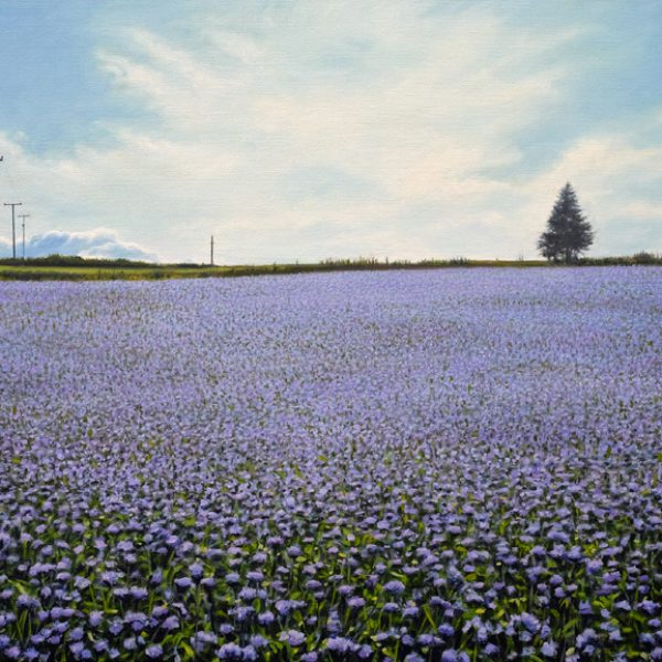 Field of Thistles, Oil on Linen 80 x 110 cm.