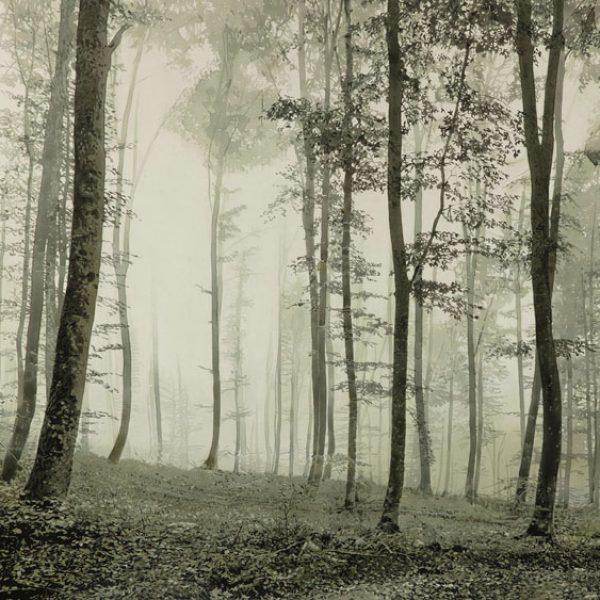 Misty Morning, Oil on Canvas 100 x 67 cm.
