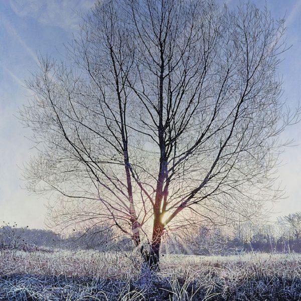 Dawn at Hinchingbrook Park, Oil on Canvas 100 x 80 cm.
